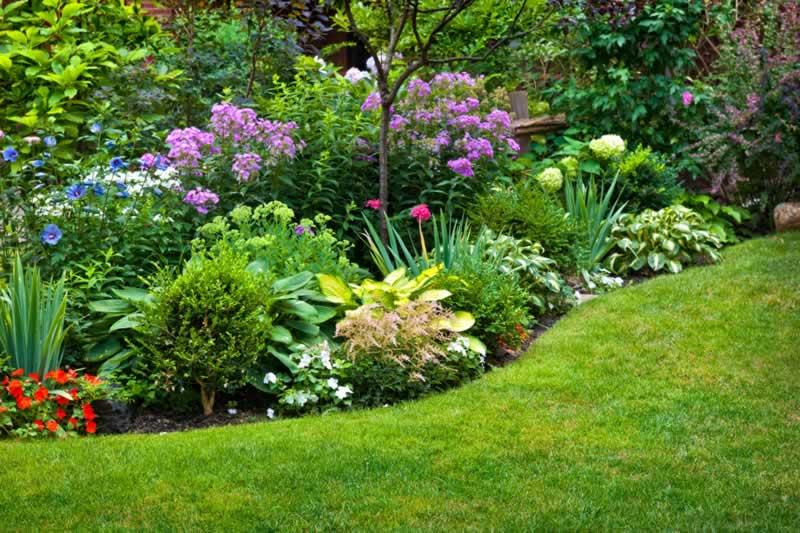 6 Beautiful Shrubs To Compliment Your Landscape Design