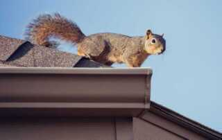Are Pests Damaging My Roof