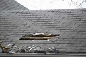 Are Pests Damaging My Roof - roof damaged by pests