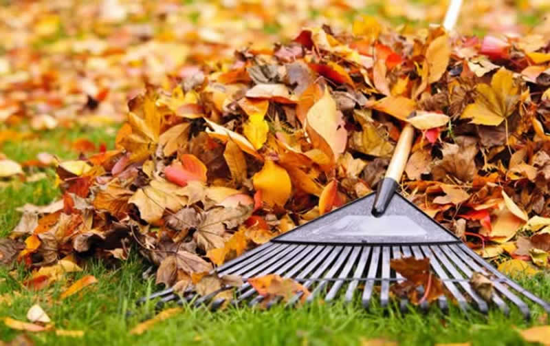 Easy Way to Rake Leaves in Your Yard