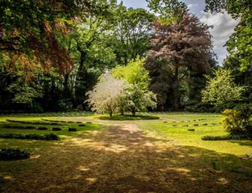 How To Landscape Around Trees And Shrubs