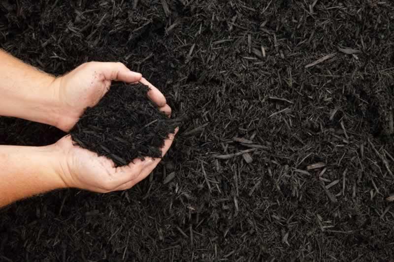 Pine Fines vs. Natural Mulch - mulch