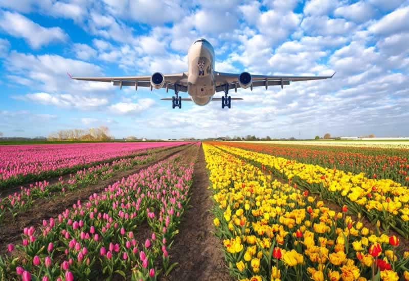 Top international flower delivery servicesworldwide