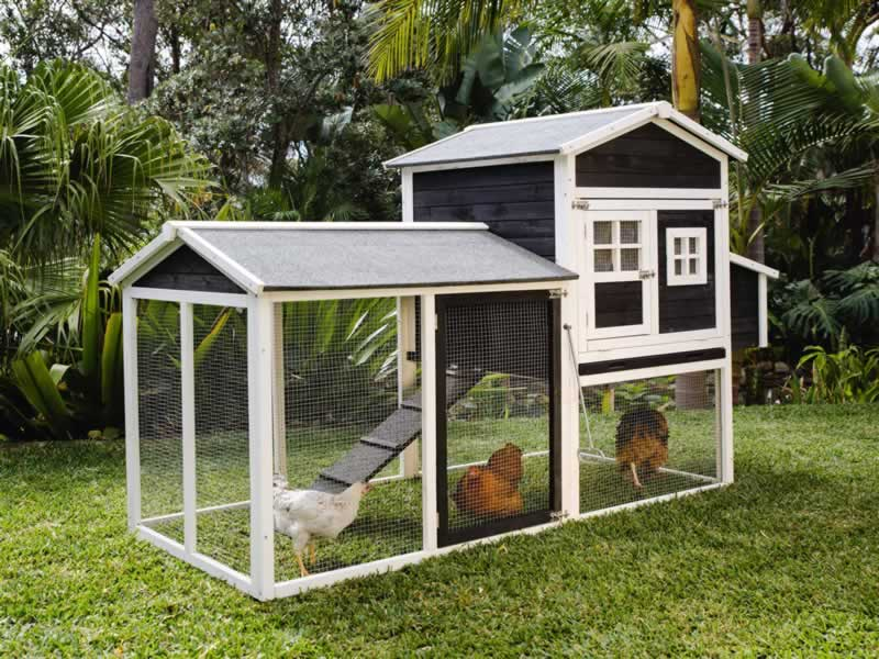 What You Need for Your Very Own Chicken Coop - chicken coop