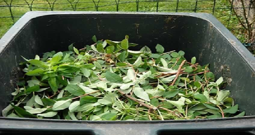 Why Skip Hire Service is Ideal for Garden Cleaning - leaves