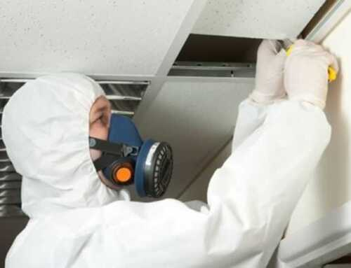 4 Things to Look Out for When Hiring an Asbestos Inspection Company