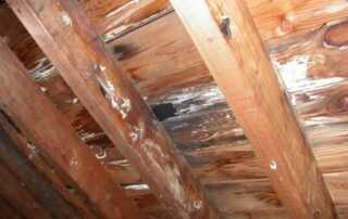 How a leaking roof can damage your home - rooting structural wood