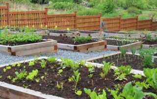 5 Best Reasons Why You Should Grow Your Garden And How To Get Started - home vegetable garden