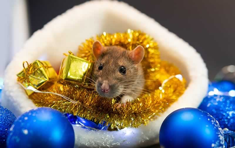 5 Pest Prevention Essentials For The Holiday Season - mouse in Christmas ornaments