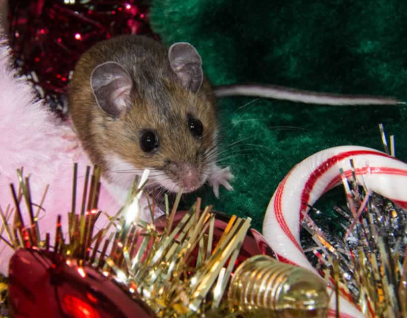 5 Pest Prevention Essentials For The Holiday Season