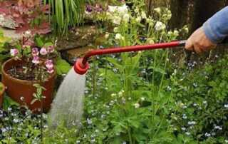5 Tips On Correctly Watering Your Garden - water