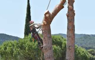 6 Signs That Indicate It's Time to Cut Down Your Tree - cutting the tree
