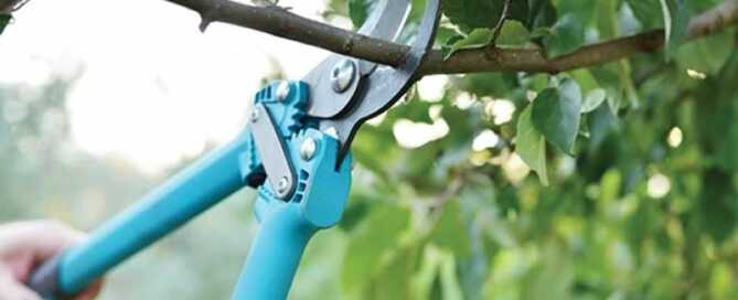 A complete guide to pruning and trimming trees