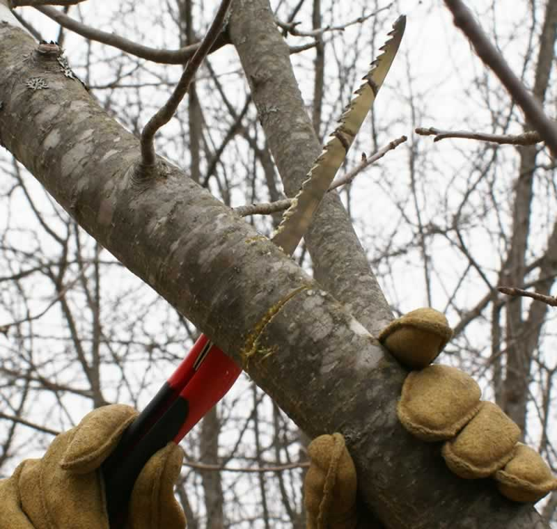 A complete guide to pruning and trimming trees - cutting