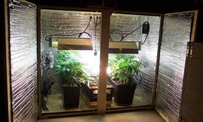 An Easy Buying Guide To Grow Boxes