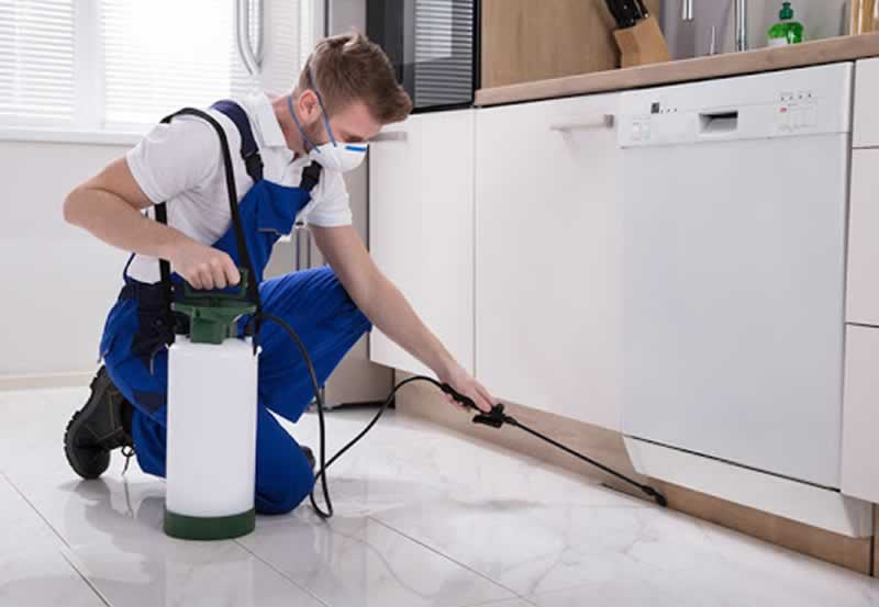 Common Mistakes When Choosing a Pest Control Company in KL - pest control