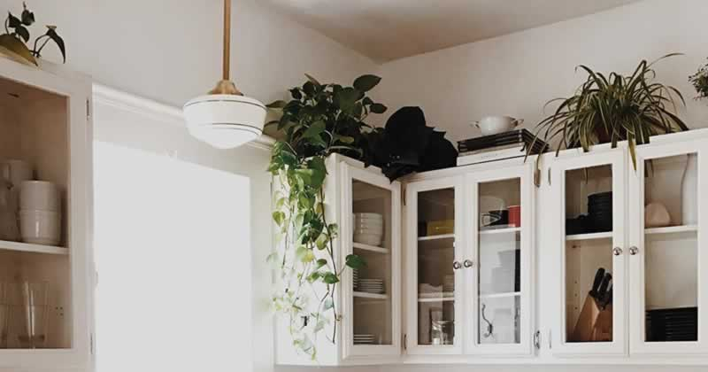 Decorate the Space Above Your Kitchen Cabinets - plants