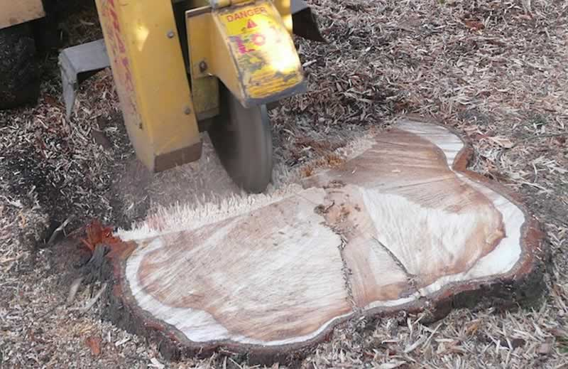 Effective Tips to Remove a Palm Tree Stump - grinding