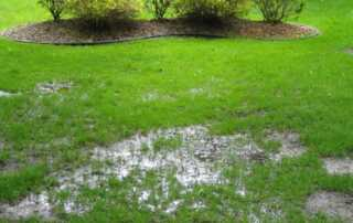 How to Improve Drainage in Your Lawn