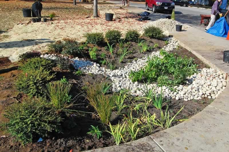 How to Improve Drainage in Your Lawn - rain garden