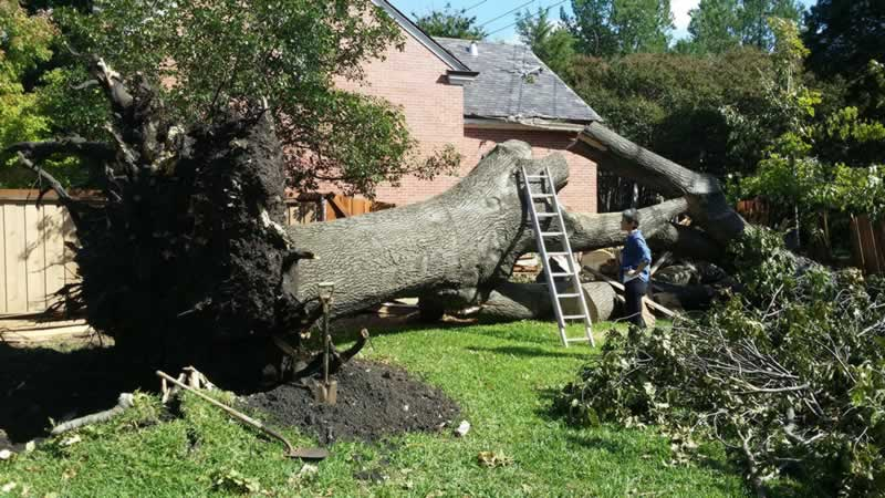 What Is The Best Time Of Year For Tree Removal - tree removal