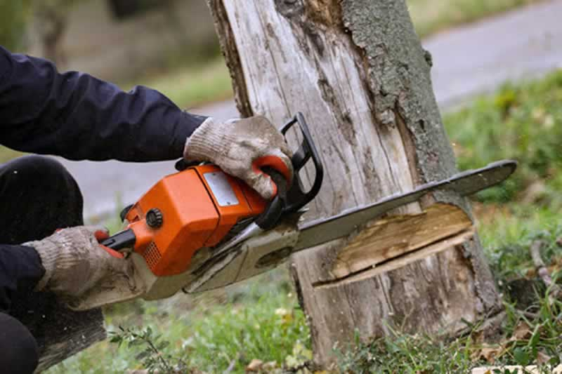 What Is The Best Time Of Year For Tree Removal