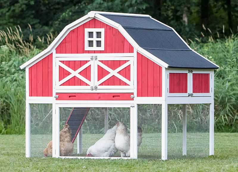 What Makes A Good Chicken Coop