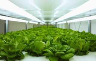 Why Should You Grow Plants Under Grow Lights