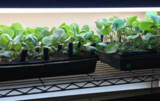 Why Should You Grow Plants Under Grow Lights - plants