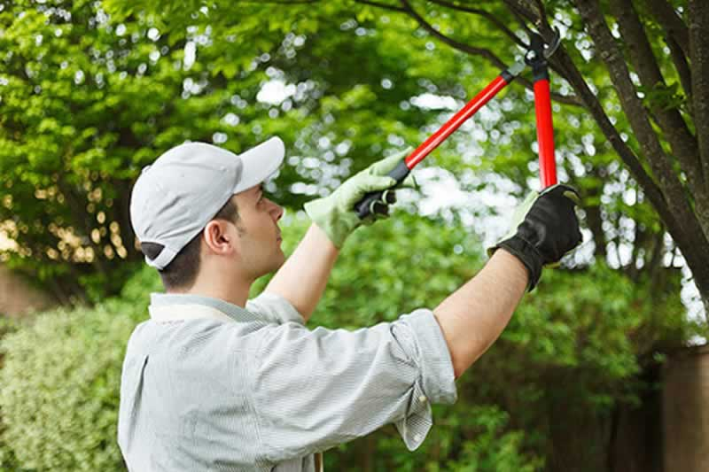 5 Reasons Why You Need A Tree Care Company