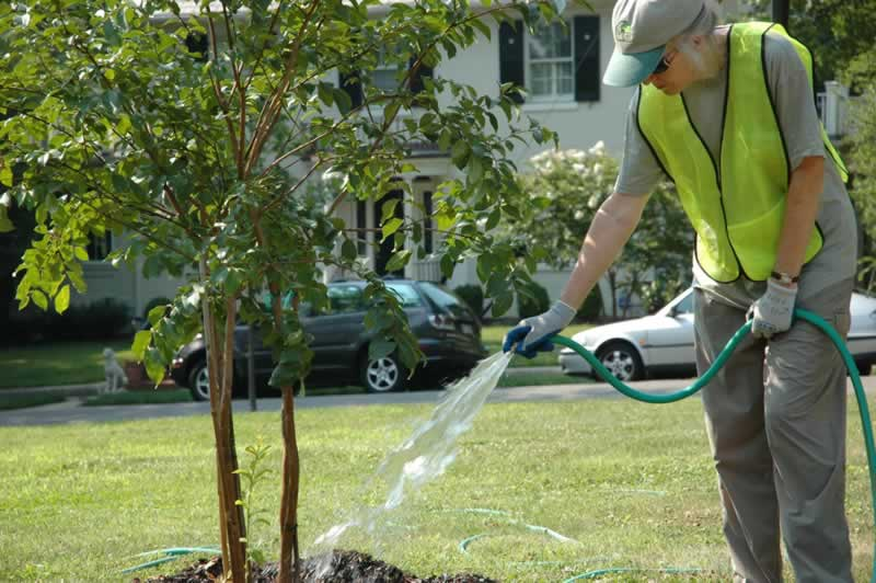 5 Reasons Why You Need A Tree Care Company - watering