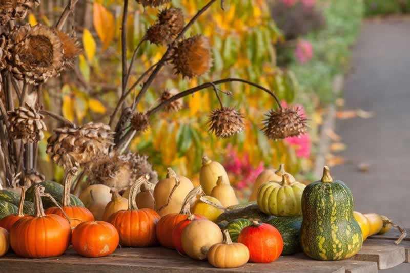 5 Tips For DIY Gardening This Autumn