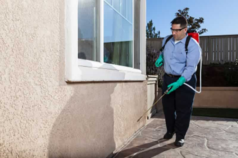 9 Different Ways To Control Dangerous Household Pests - spraying