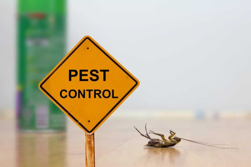 9 Different Ways To Control Dangerous Household Pests
