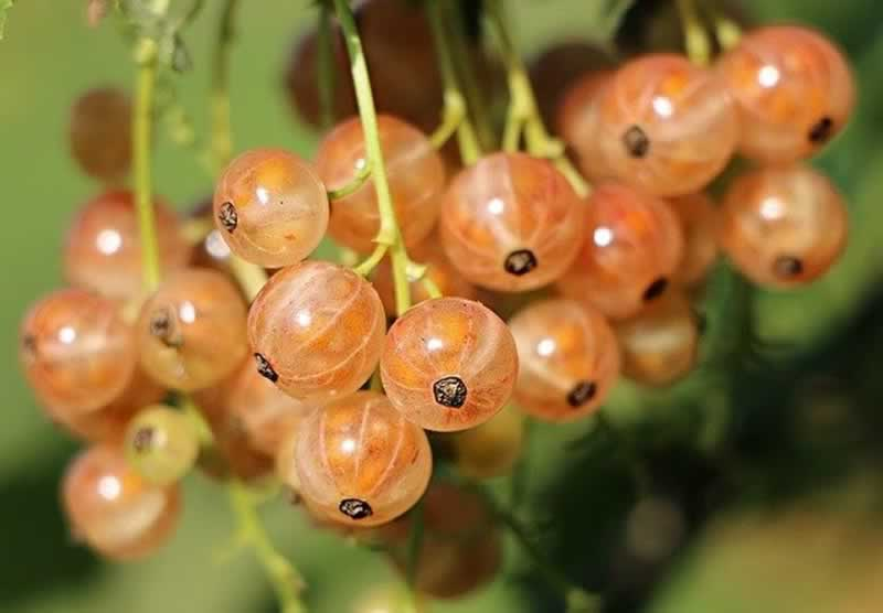 Fruits and Vegetables to Grow in Your Garden