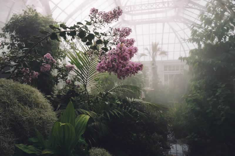 Greenhouse Care and Maintenance Tips From the Experts - plant