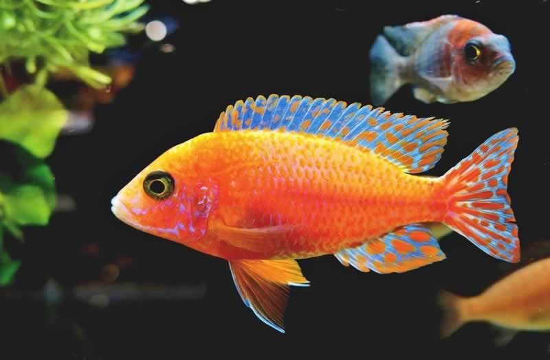 How To Effectively Handle A Leaking Aquarium - fish