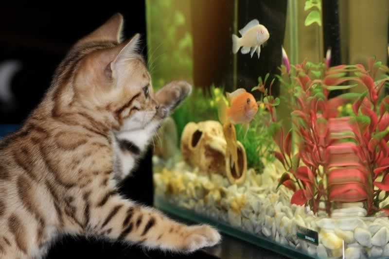 How To Effectively Handle A Leaking Aquarium