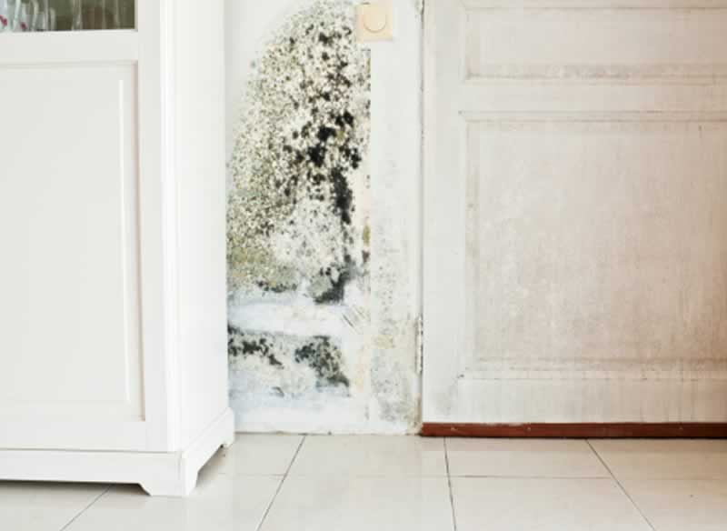 How to Tackle the Mold Issue in Your Home - mold