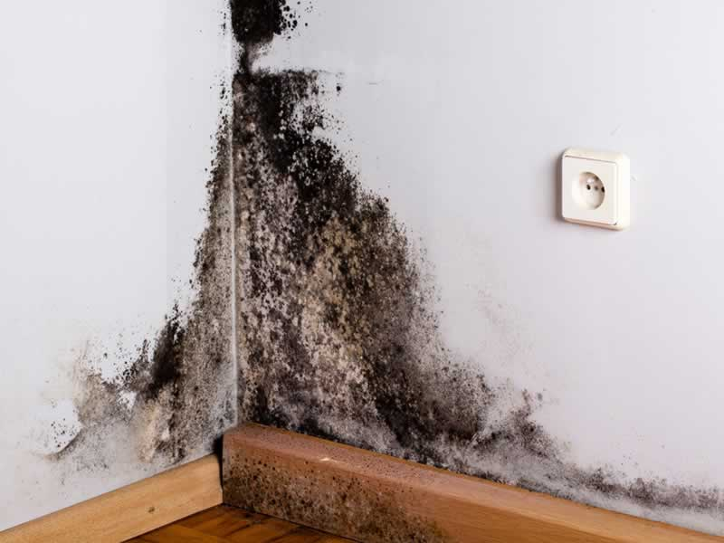 How to Tackle the Mold Issue in Your Home
