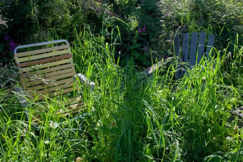 Simple Handyman Tips On How To Deal With Pests At Home - overgrown garden