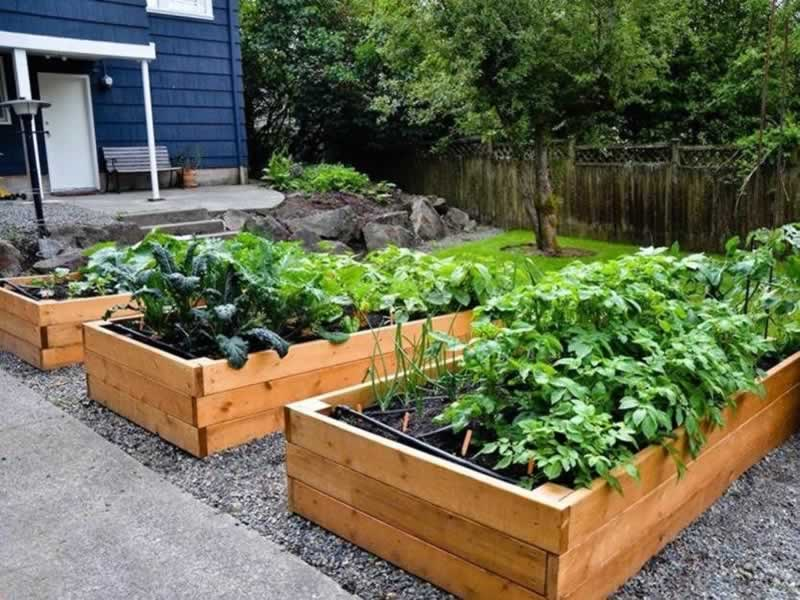 Tips on Gardening and How to Grow Plants for Beginners - raised beds