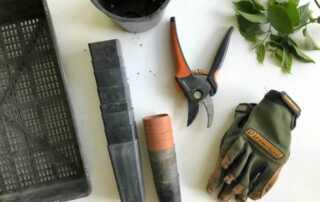 6 Expert Gardening Tips For The Winter Season
