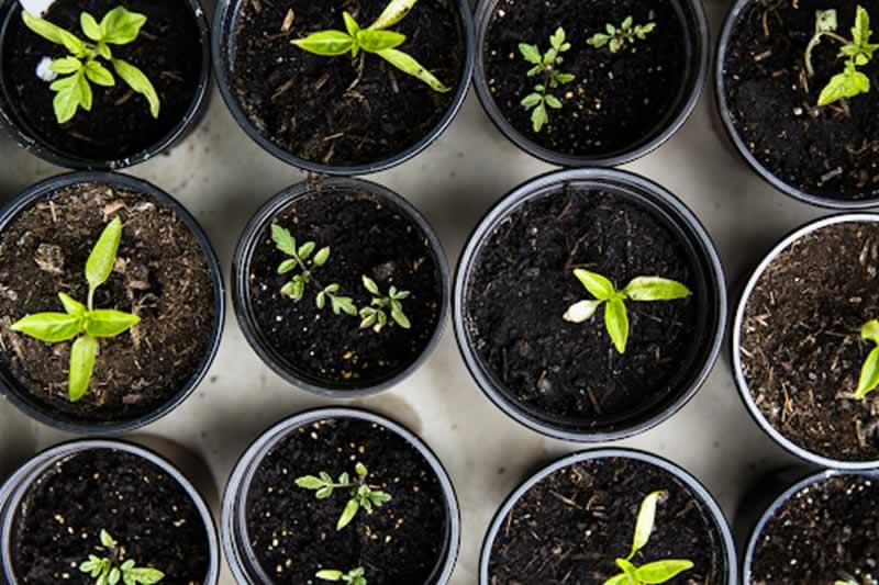 6 Expert Gardening Tips For The Winter Season - plants
