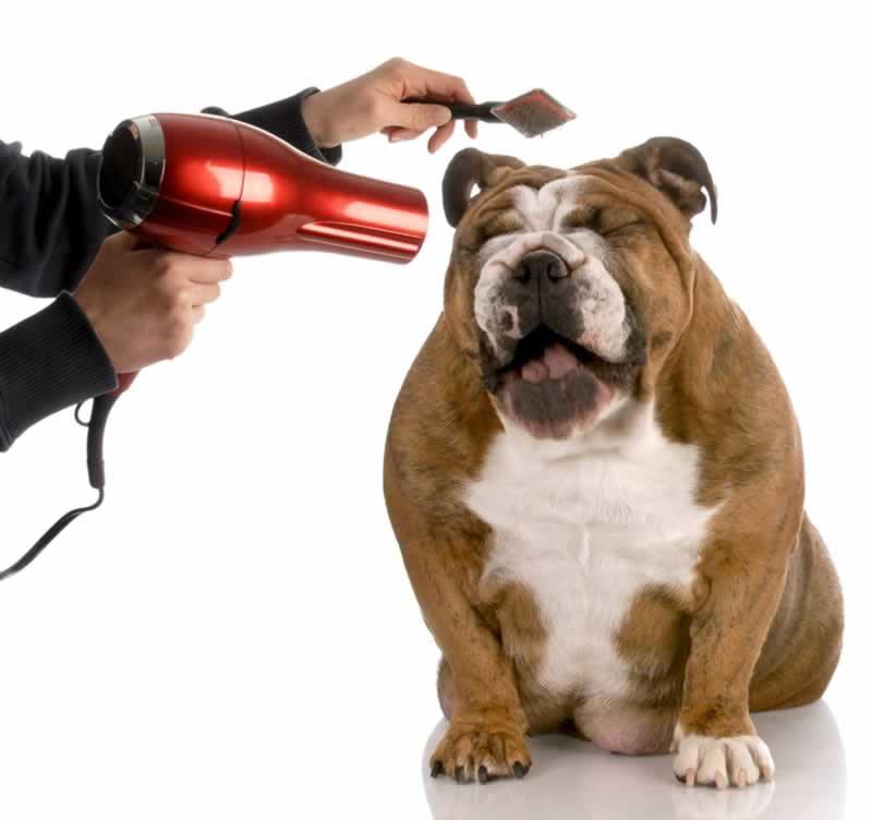 7 common mistakes that people make when grooming their dogs - fan