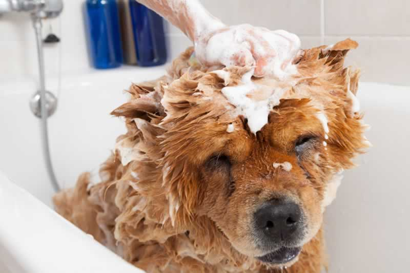 7 common mistakes that people make when grooming their dogs