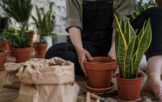 Best Ways to Improve Your Garden Design