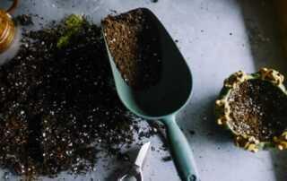 Best Ways to Improve Your Garden Design - soil