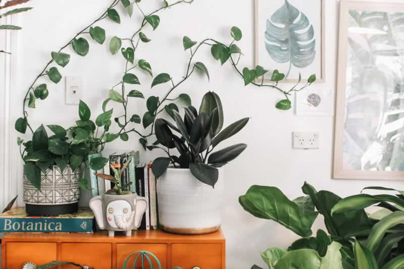 Easy Upgrades That Will Make Your Home More Enjoyable - plants