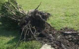 How to Remove Bushes & Trees Near Your Home